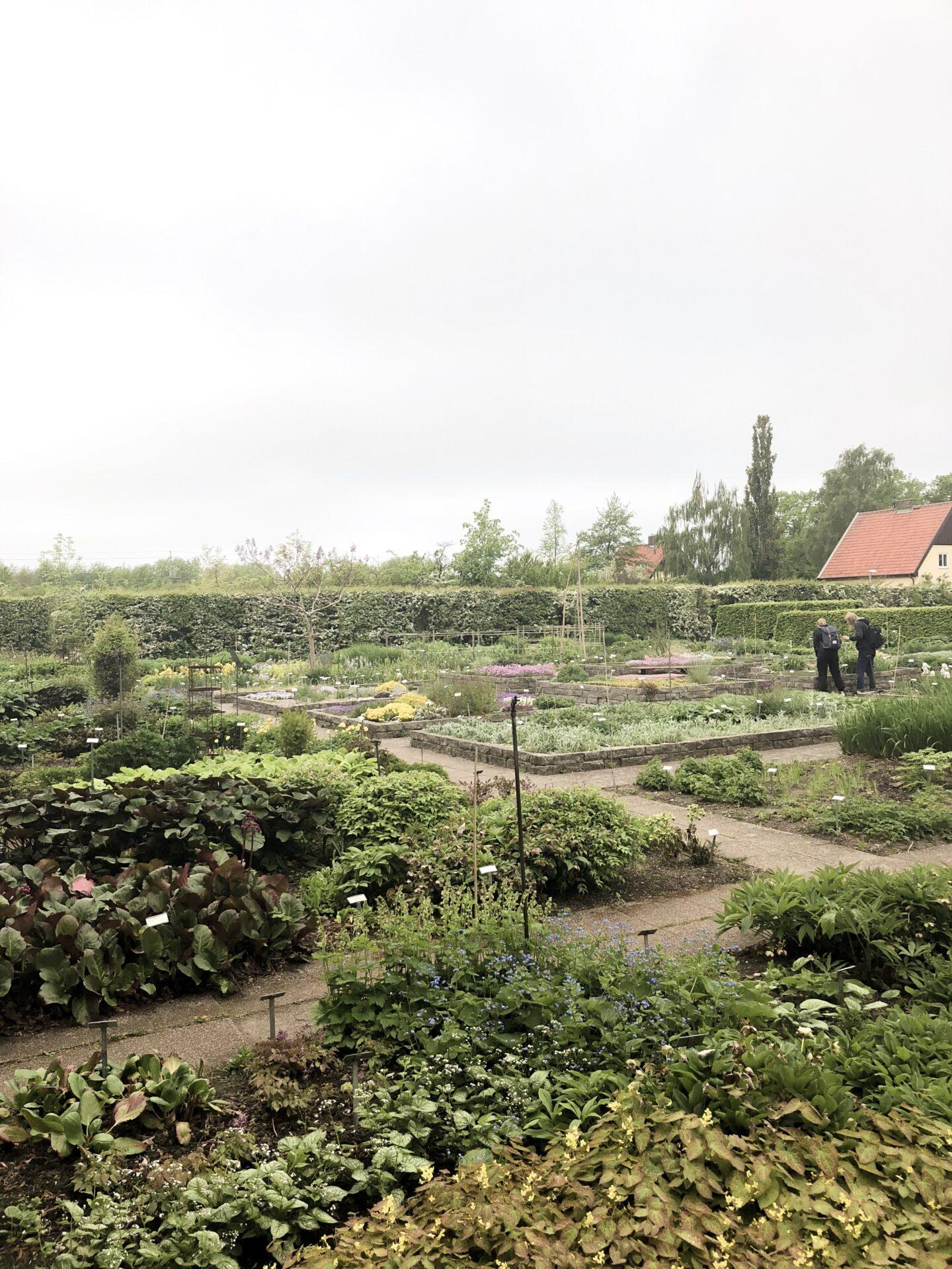 Trädgårdsingenjör design SLU Alnarp