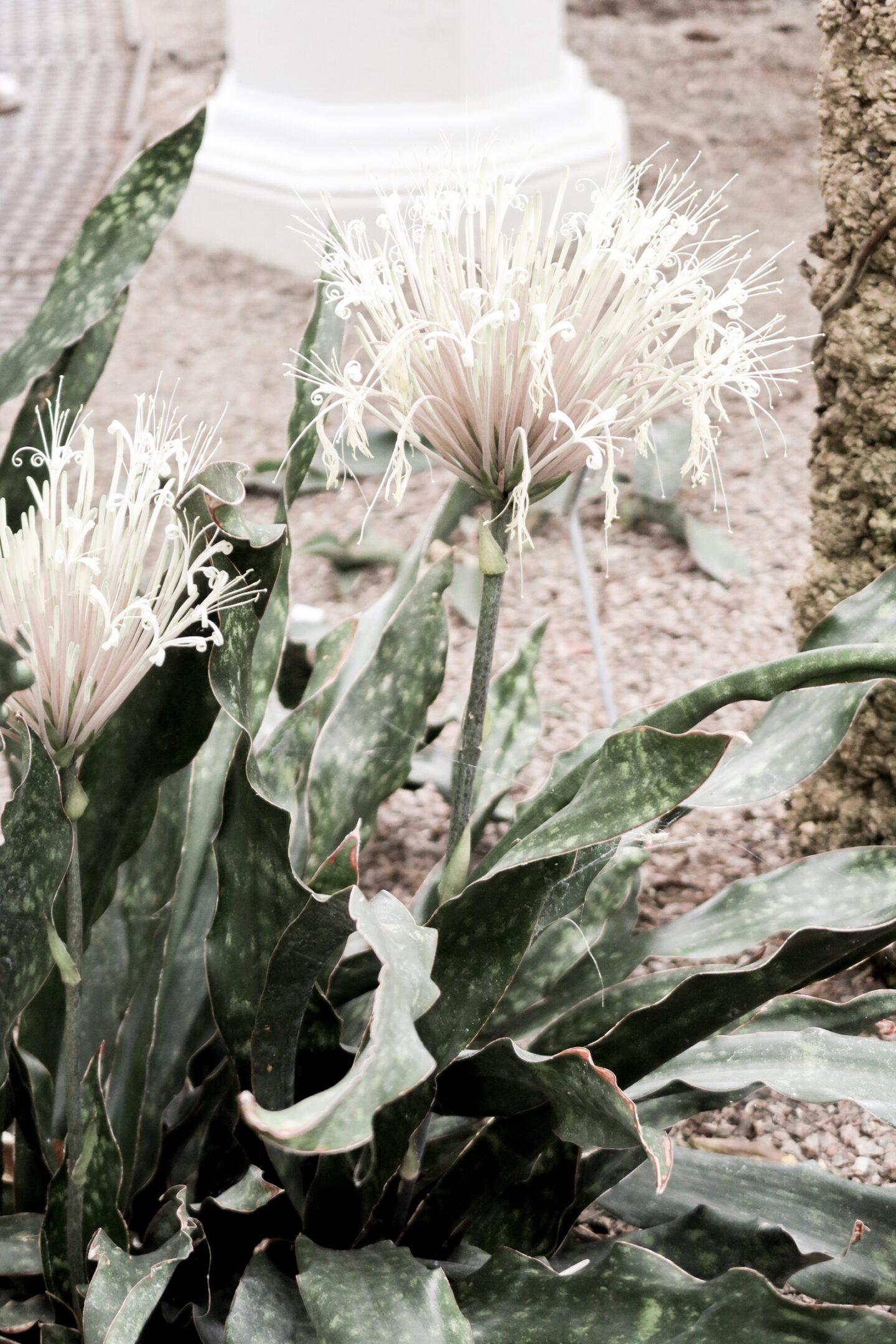 palmehuset botanisk have københavn