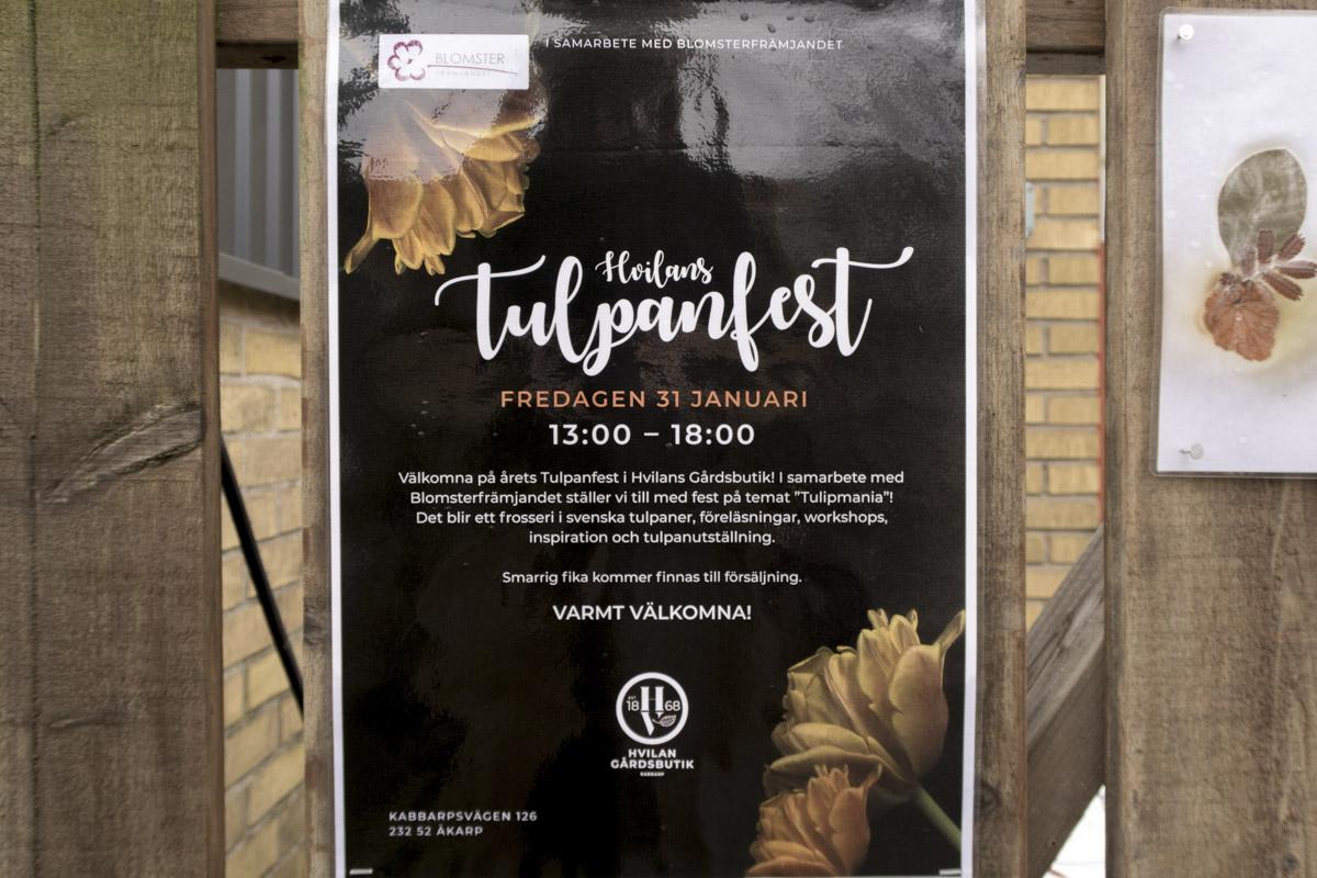 Tulpanfest på Hvilan